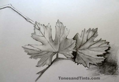 EDM 15 drawing of grape leaves