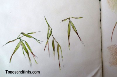 drawing of wild grass