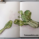 drawing of bokchoy