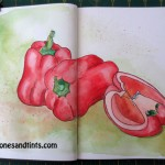 drawing of capsicum
